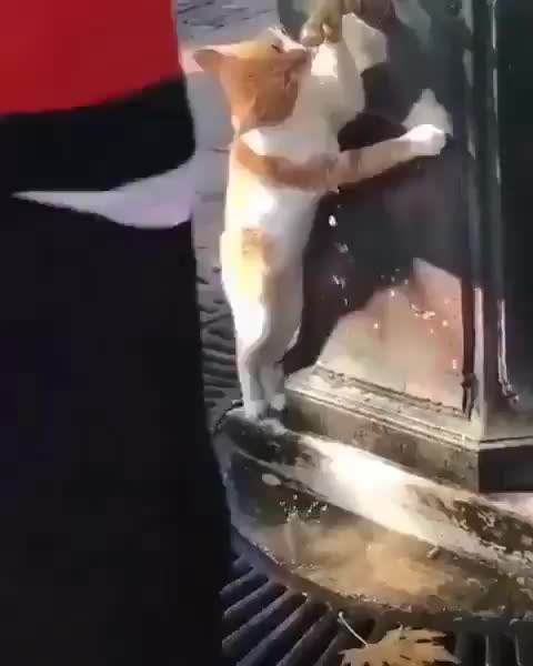 Aunque no lo creas mira como toma agua este gato
